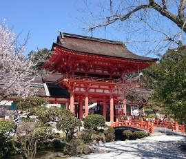 京都 上賀茂神社 桜