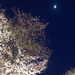 京都 醍醐寺 夜桜