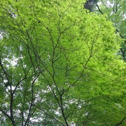 新緑の上賀茂神社