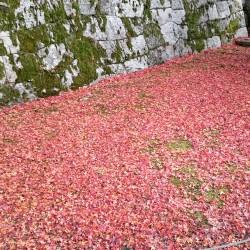秋 美しい京都