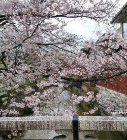 美しい京都