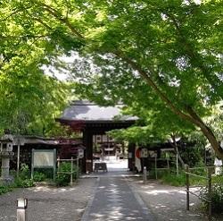 美しい新緑 梨木神社さん