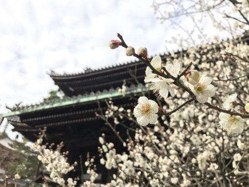 春を感じる 京都結婚式